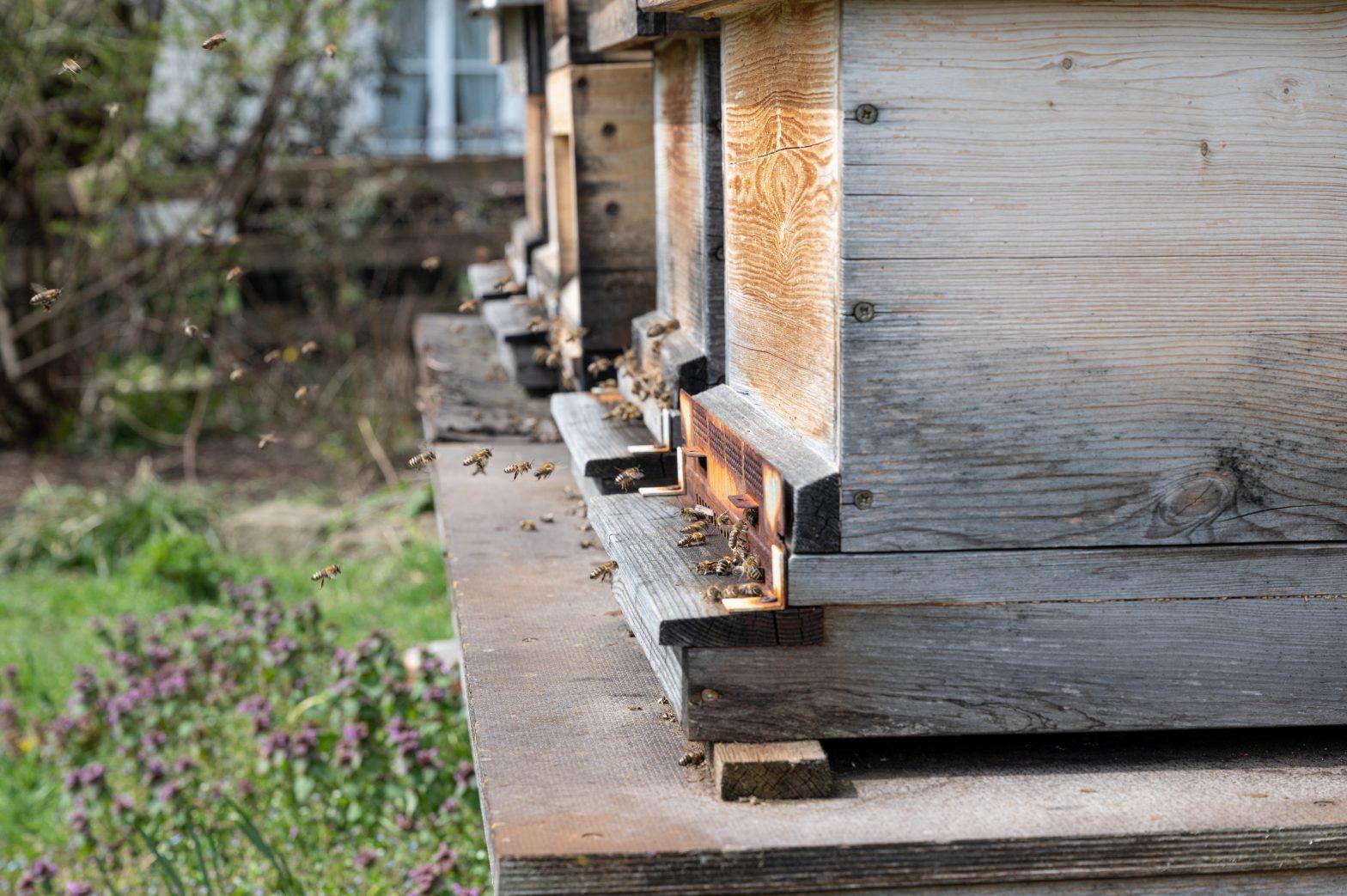 Flugbetrieb am Bienenstand